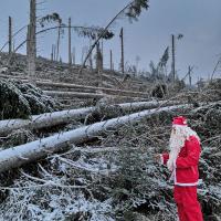 Babbo Natale Foresta Blu