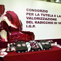 Roveredo Radicchio 16 IMG 8451